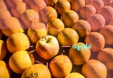 A plate of oranges with a single apple intermixed.