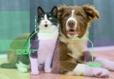 An AI scans an image and highlights the cat and dog in it.